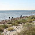 Gruppelogo af Egerup Strand (Vestsjælland)